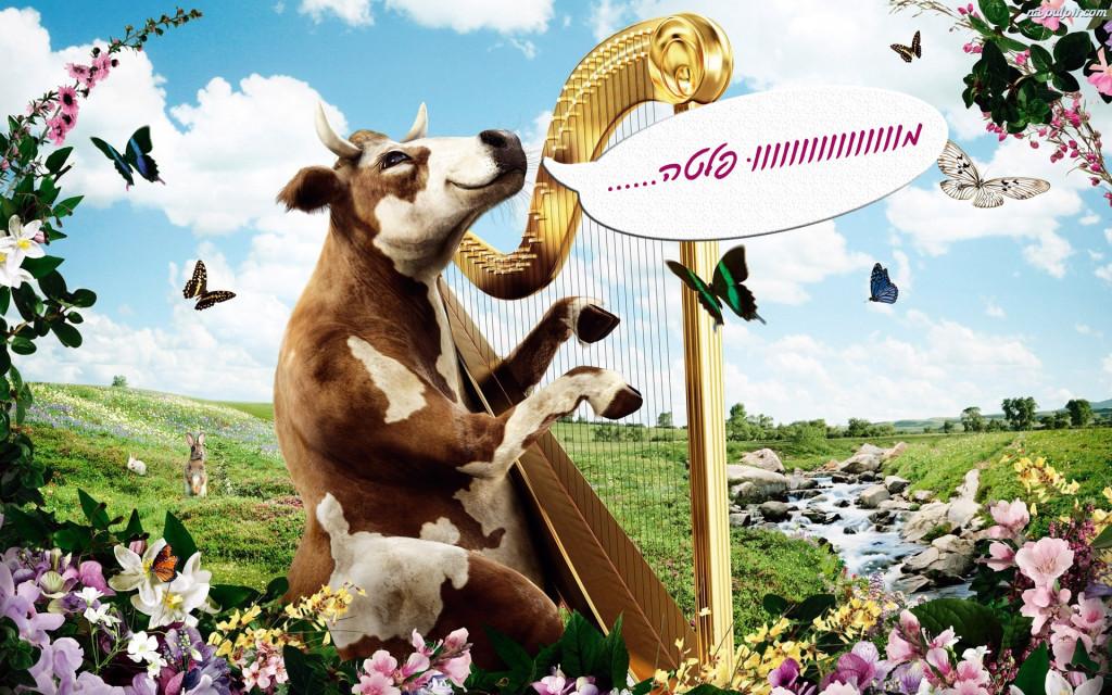 aciata-harfa-krowa
