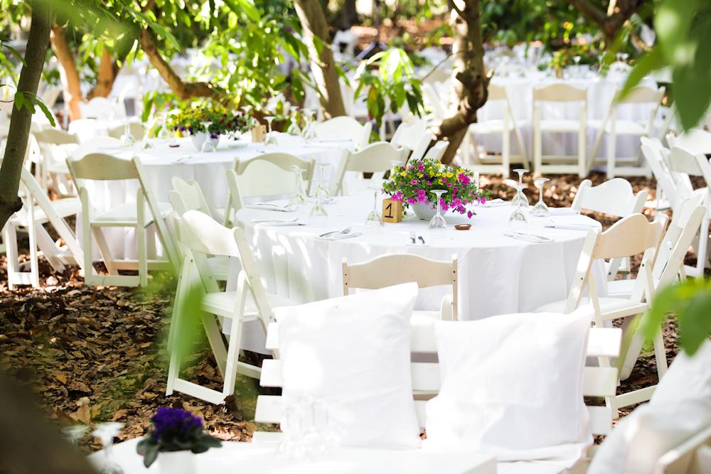 מבט כללי - חתונה במטע אבוקדו