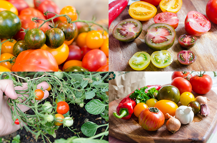 סלסת עגבניות טבעוני
